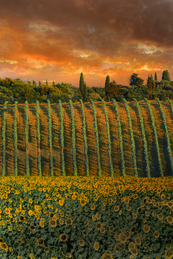Photograph tuscan magic by David Hobcote on 500px