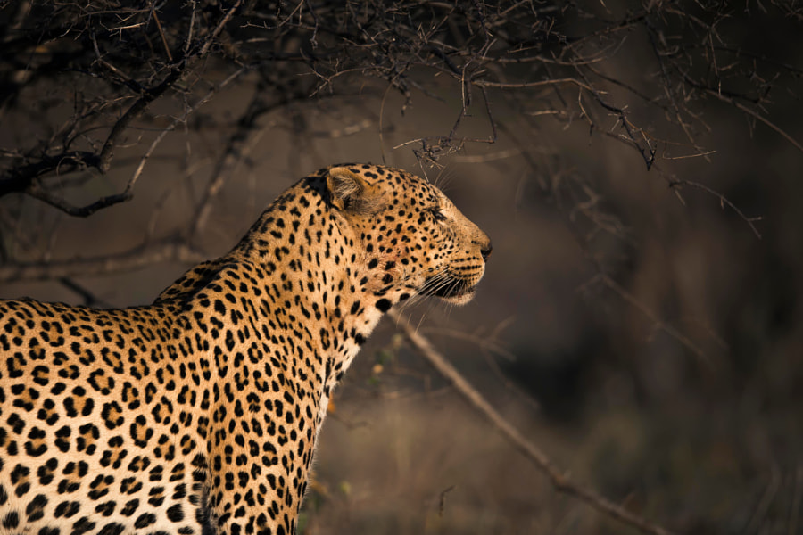 Early Riser de Chris Fischer sur 500px.com