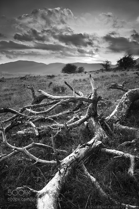 Photograph The Dead Pine by Florent Courty on 500px