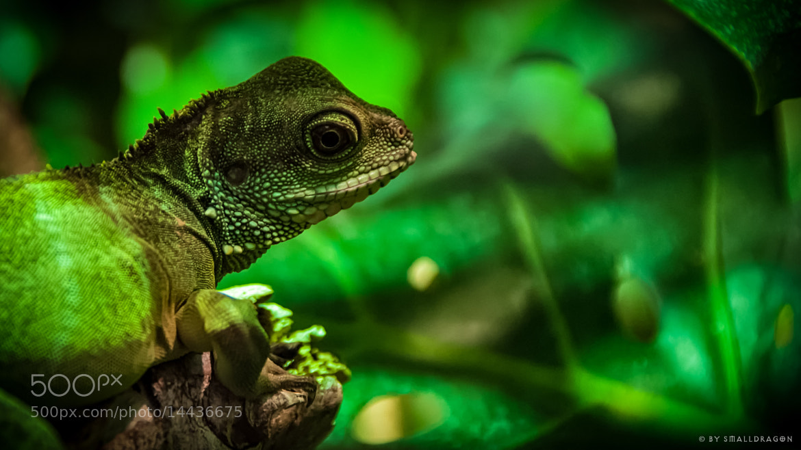 Photograph Lizzard 01 by Sven Reitis on 500px