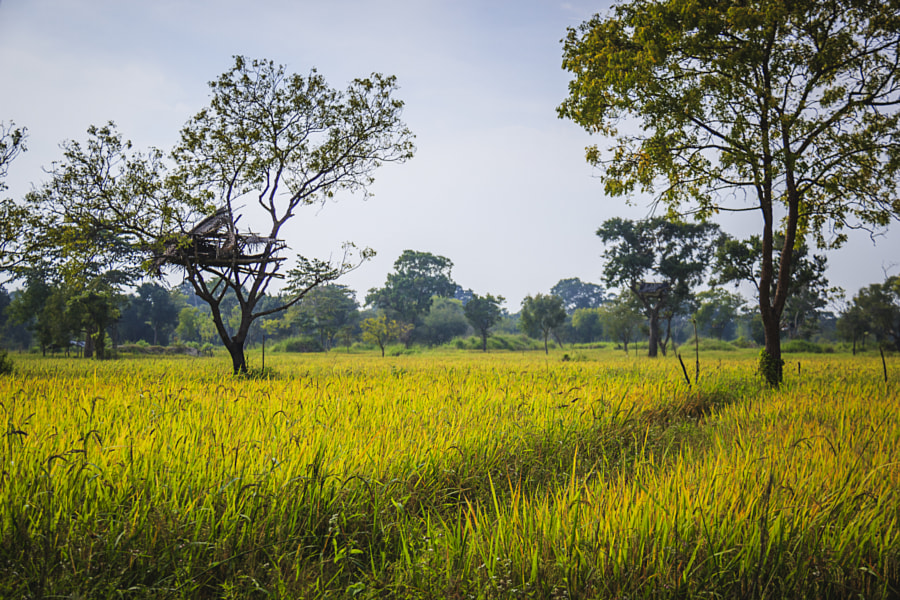 Watching Over Rice by Son of the Morning Light on 500px.com