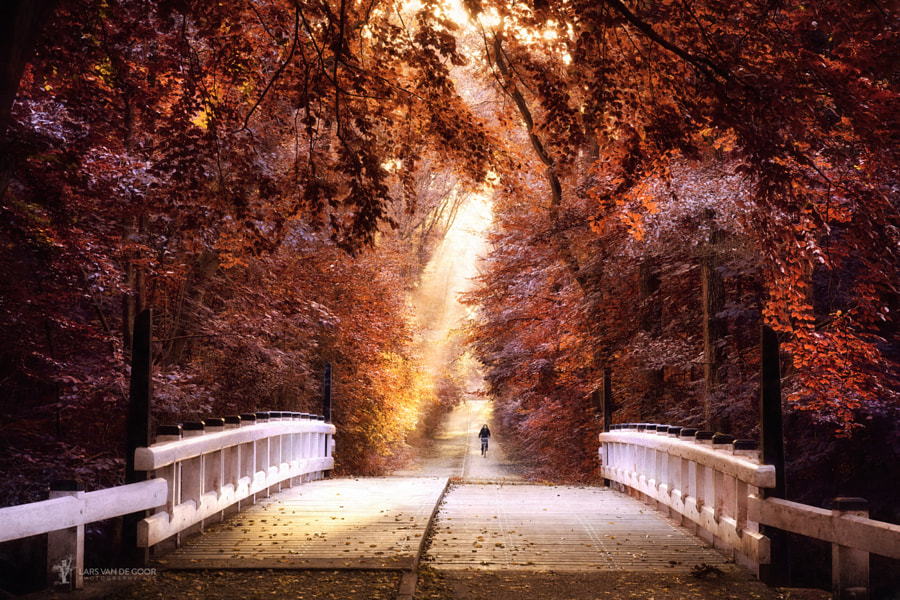 taking the bridge of light by Lars van de Goor on 500px.com