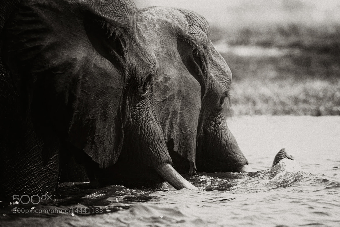 Photograph Time for a swim by Nicole Cambré on 500px