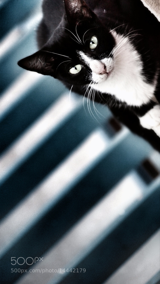 Photograph Icatchya by Icatchya ... on 500px