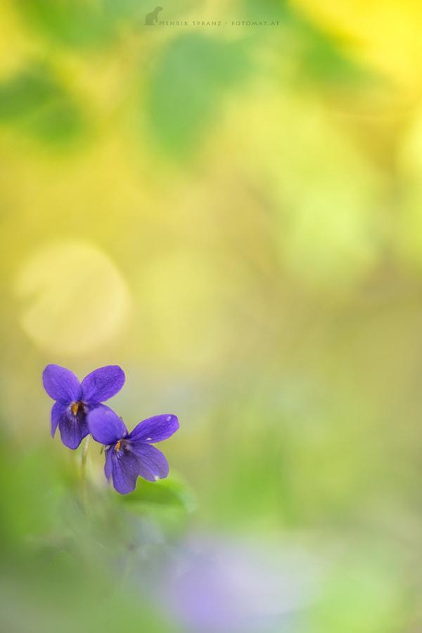 ~ Violet Dreams ~