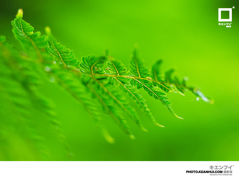 Photograph Leaf by Law Kean Hui on 500px
