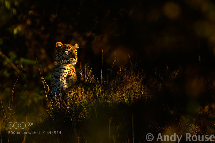 Photograph Last Light by Andy Rouse on 500px