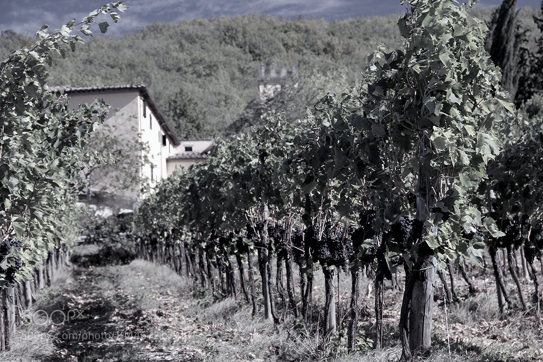 Photograph Sangiovese. by Valerij D. on 500px