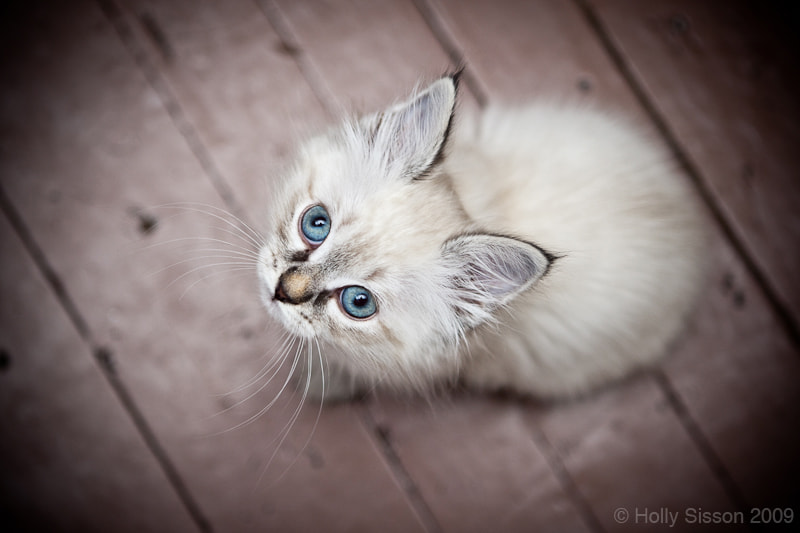 Photograph Blue Eyed by Holly Sisson on 500px