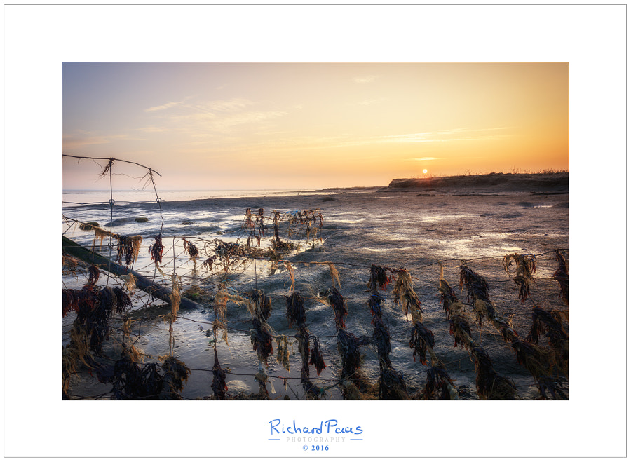 Sunrise Wierum low tide by Richard Paas on 500px.com