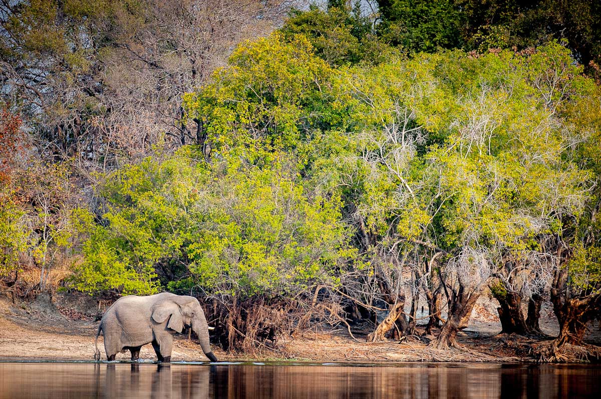 Photograph Kafue river, Zambia by Gorazd Golob on 500px