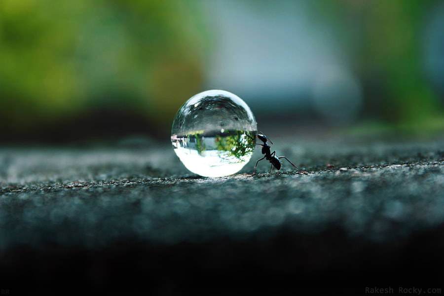 The Ants Dream! by Rakesh Rocky on 500px.com