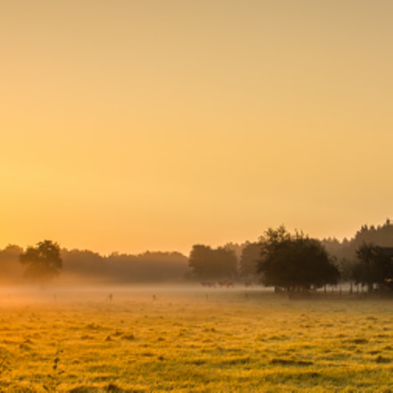 Morning sun, Canon EOS 550D, Canon EF-S 18-55mm f/3.5-5.6 USM