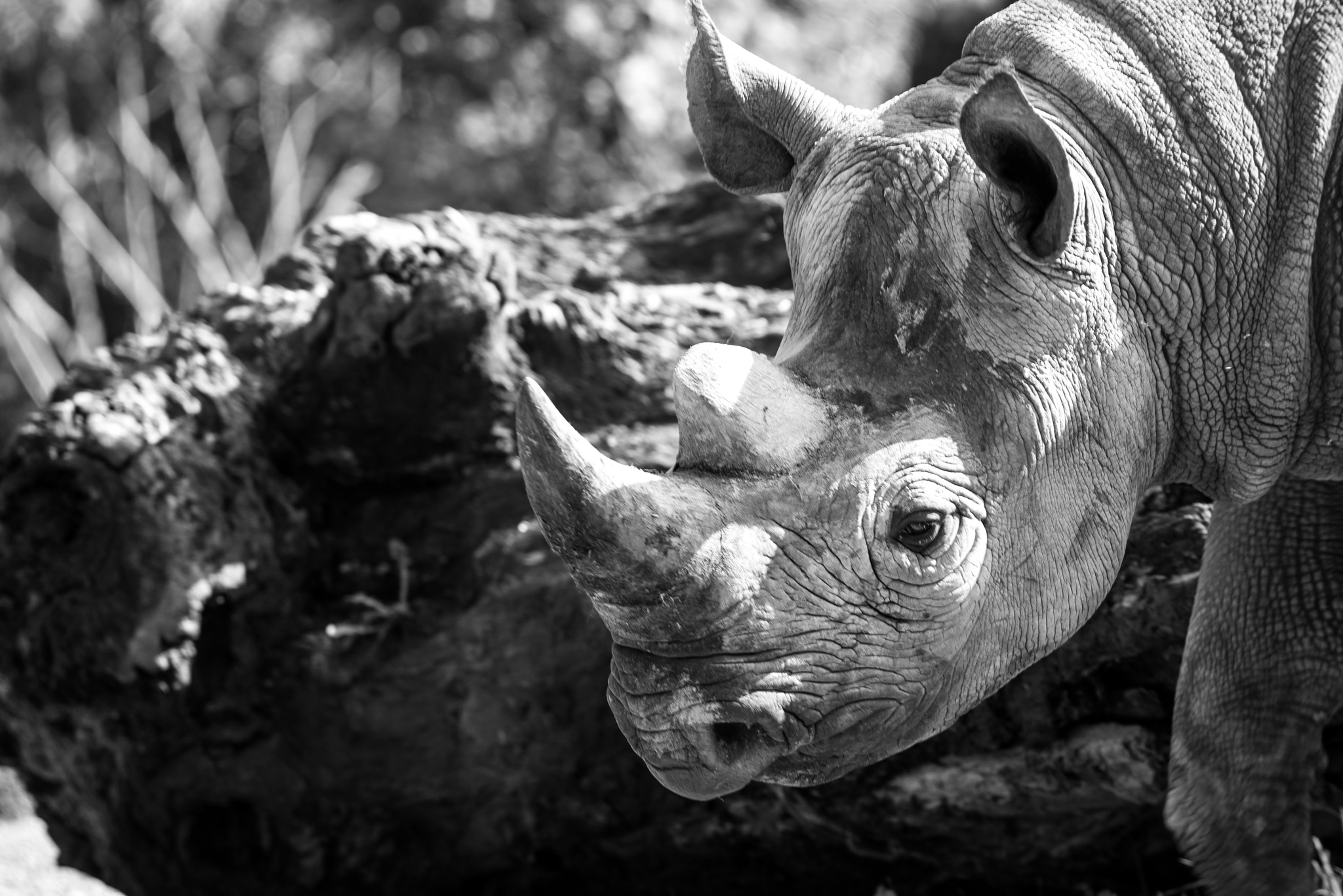 Photograph Rhino  by Michael H on 500px