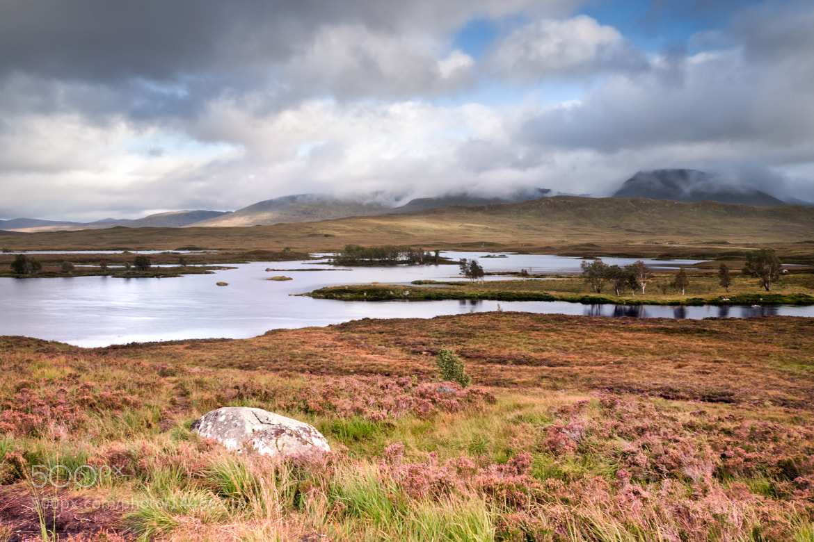 Photograph Rannoch Moor Heather by Chris Frost on 500px