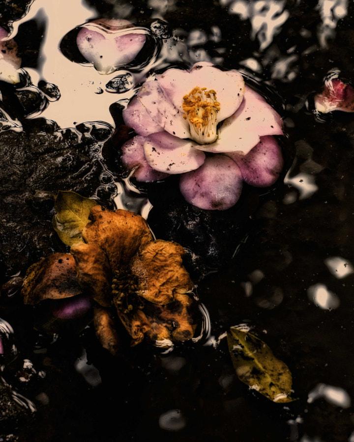 fallen flowers after the rain