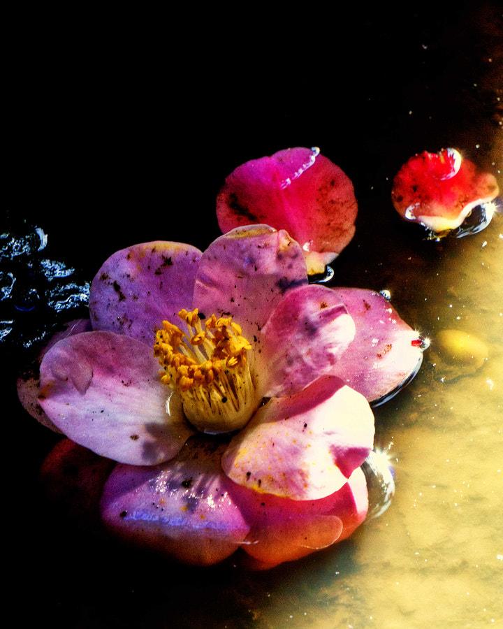 Fallen flowers after the rain 2