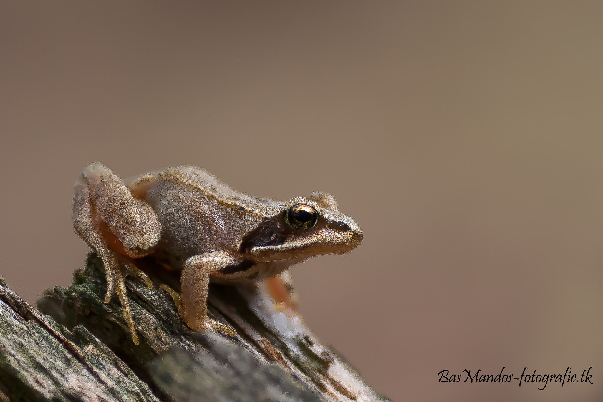 Photograph Frog.. by Bas Mandos on 500px