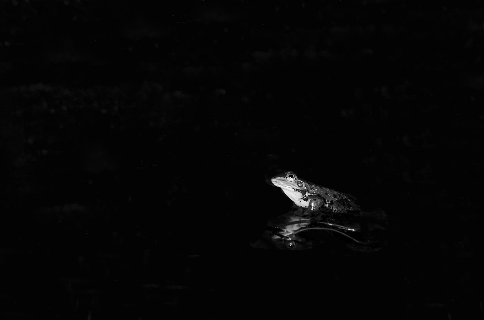 Photograph Frog by Audrey Garcia on 500px