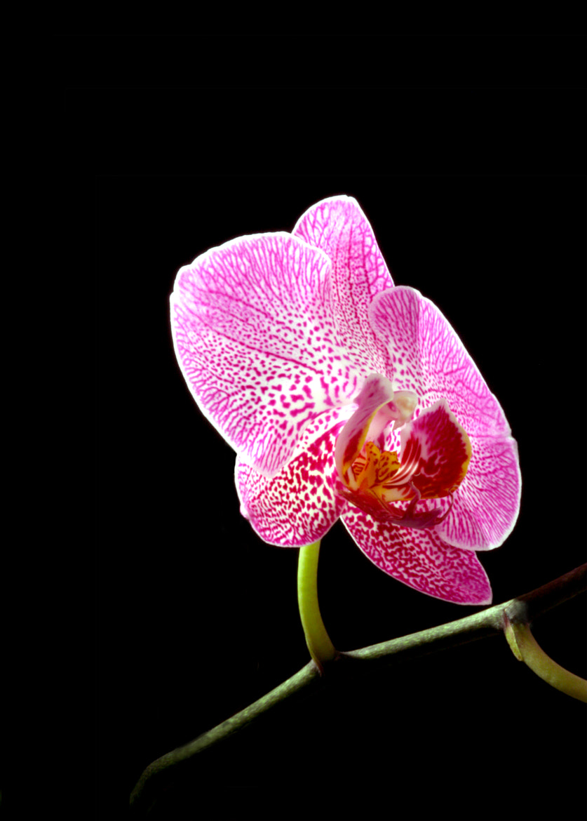 Photograph Orchidee by Thomas Jäger on 500px
