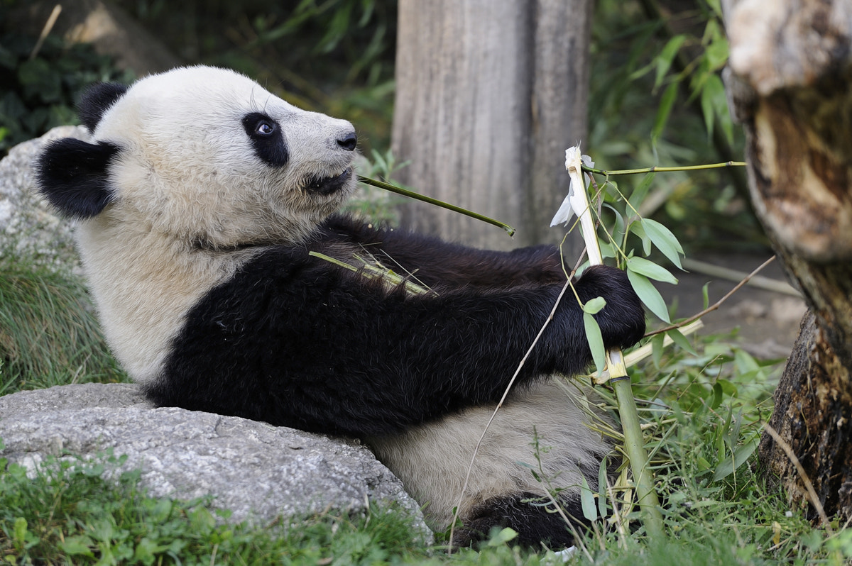 Photograph Bamboo Pulling by Josef Gelernter on 500px