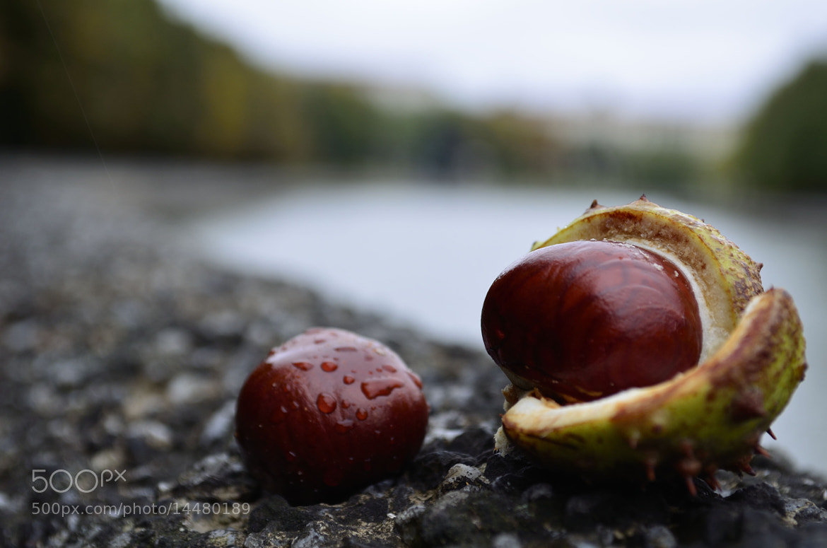 Photograph chestnut by Dima Korostik on 500px