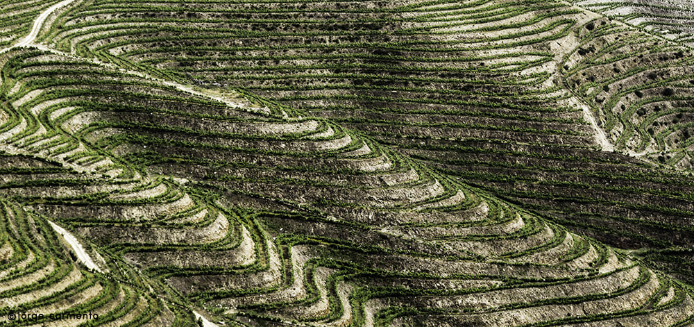 Photograph Douro Valley by Jorge Sarmento on 500px