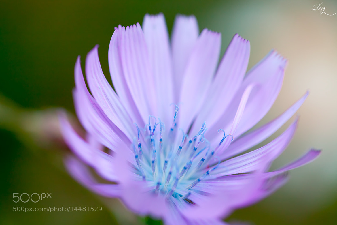 Photograph Beauty lies within by Chirag Pradhan on 500px