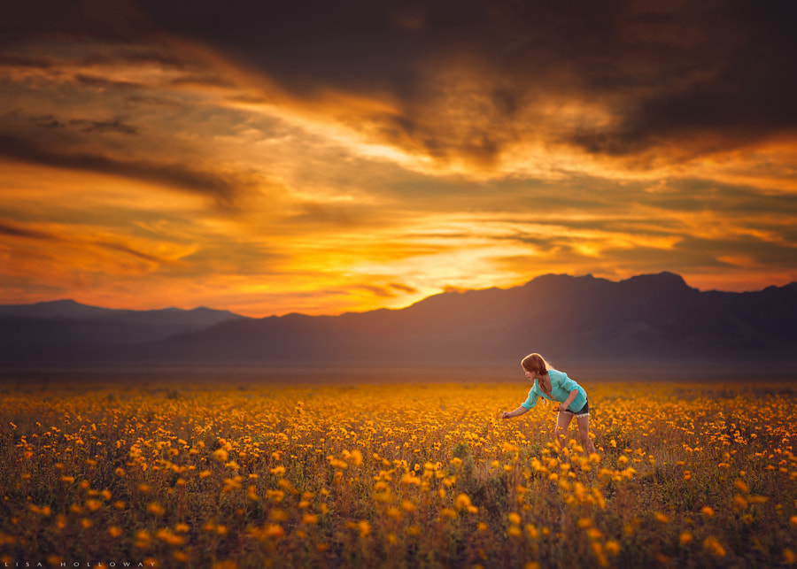 Field of Dreams by Lisa Holloway on 500px.com