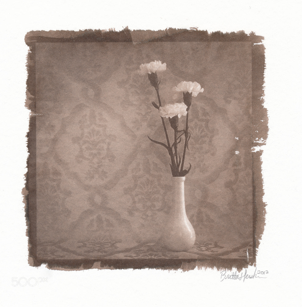Photograph Three Carnations by Britta Hershman on 500px