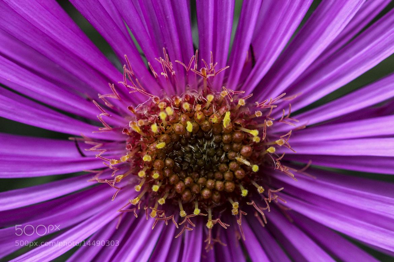 Photograph Pink Flower Macro by Georgina Gomez on 500px