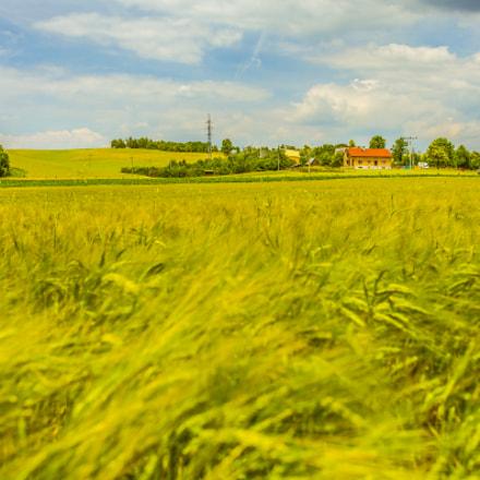 House on Wheat Field