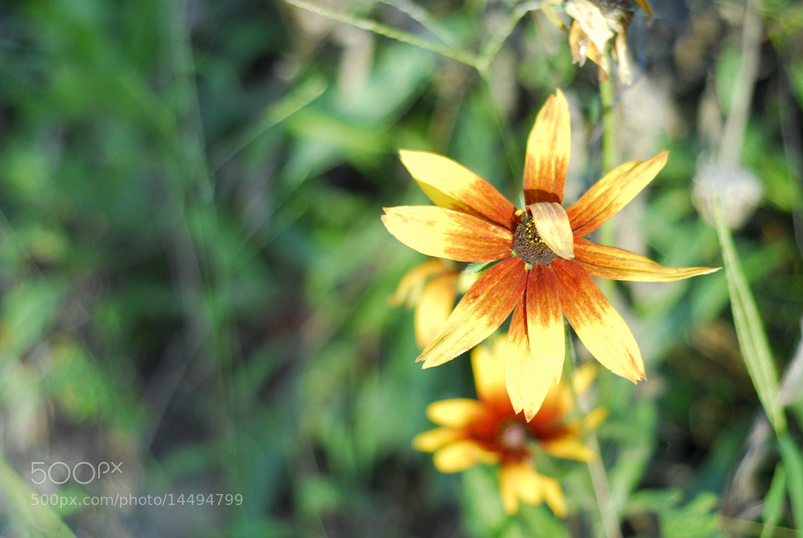Photograph Fall flowers.. by Aruna Dangol on 500px