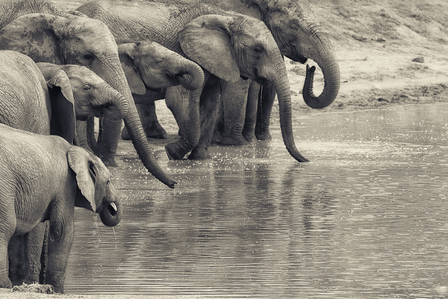 Photograph Waterhole Gathering by Mario Moreno on 500px