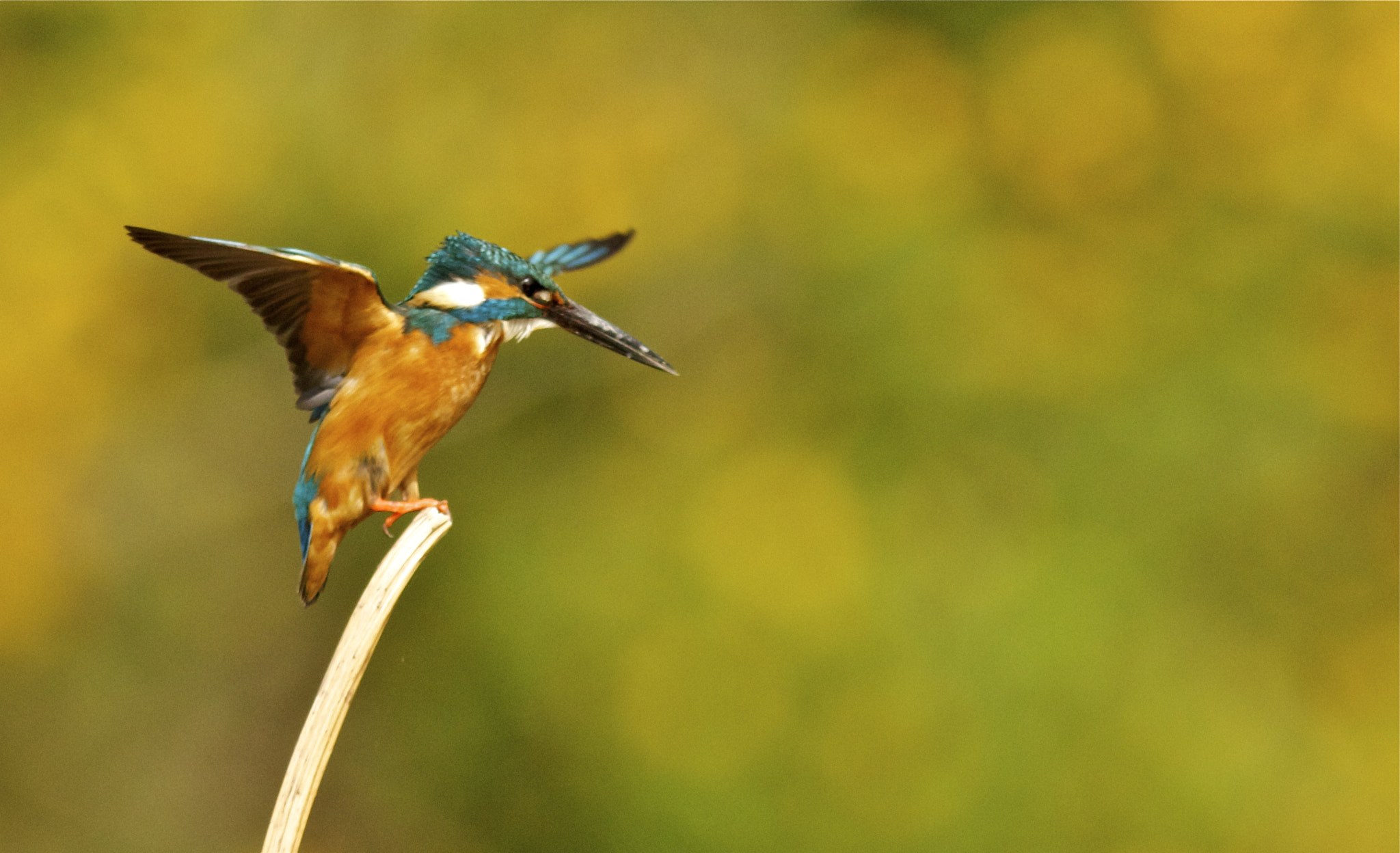 Photograph Making Its Move by Mike Romani on 500px