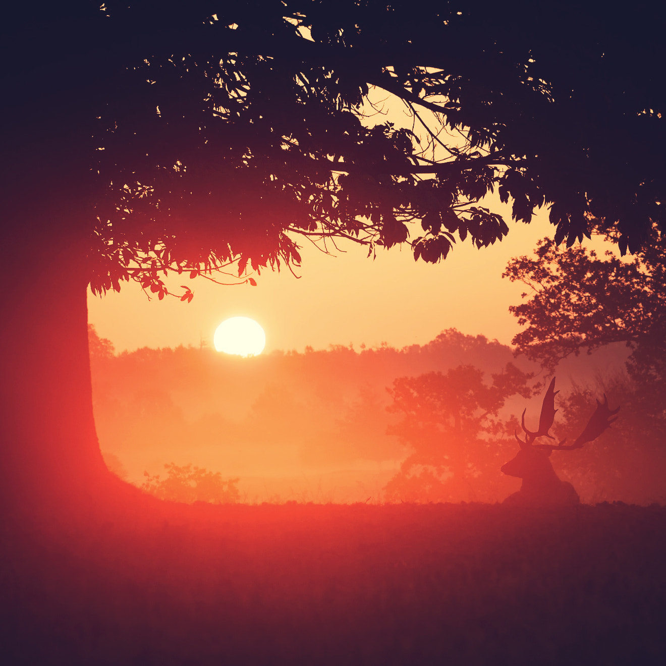 Photograph sunup by Mark Bridger on 500px