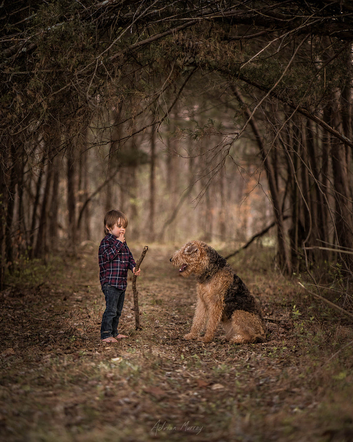 Forest by Adrian C. Murray 1