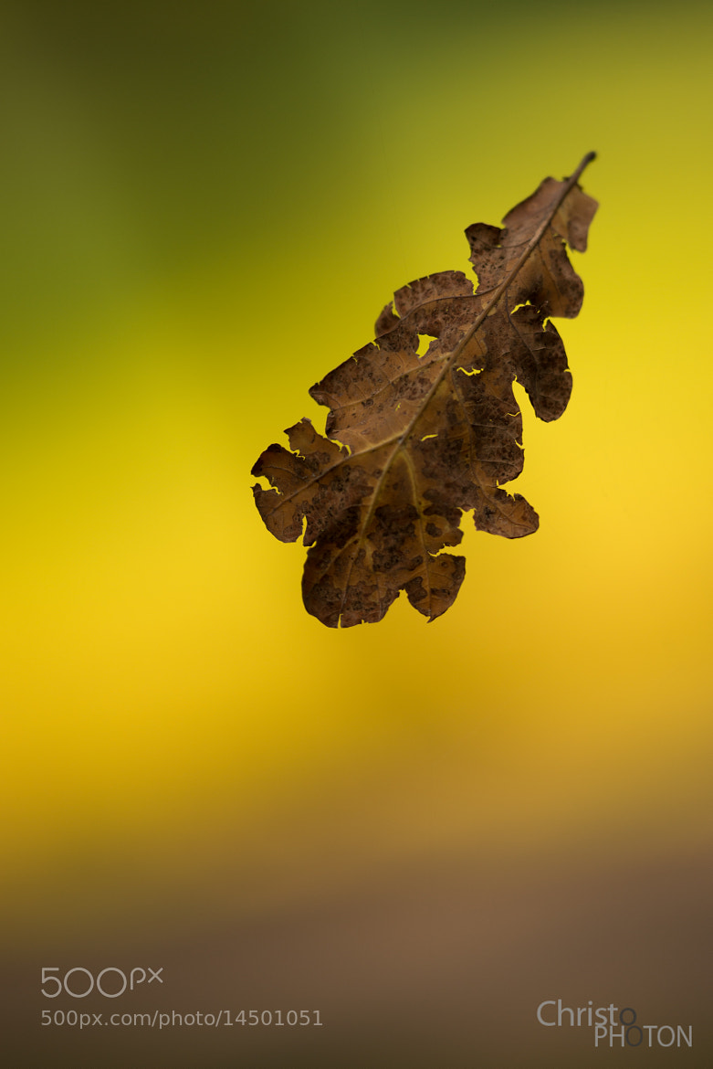 Photograph Suspended Leaf by Christoph Dohmesen on 500px