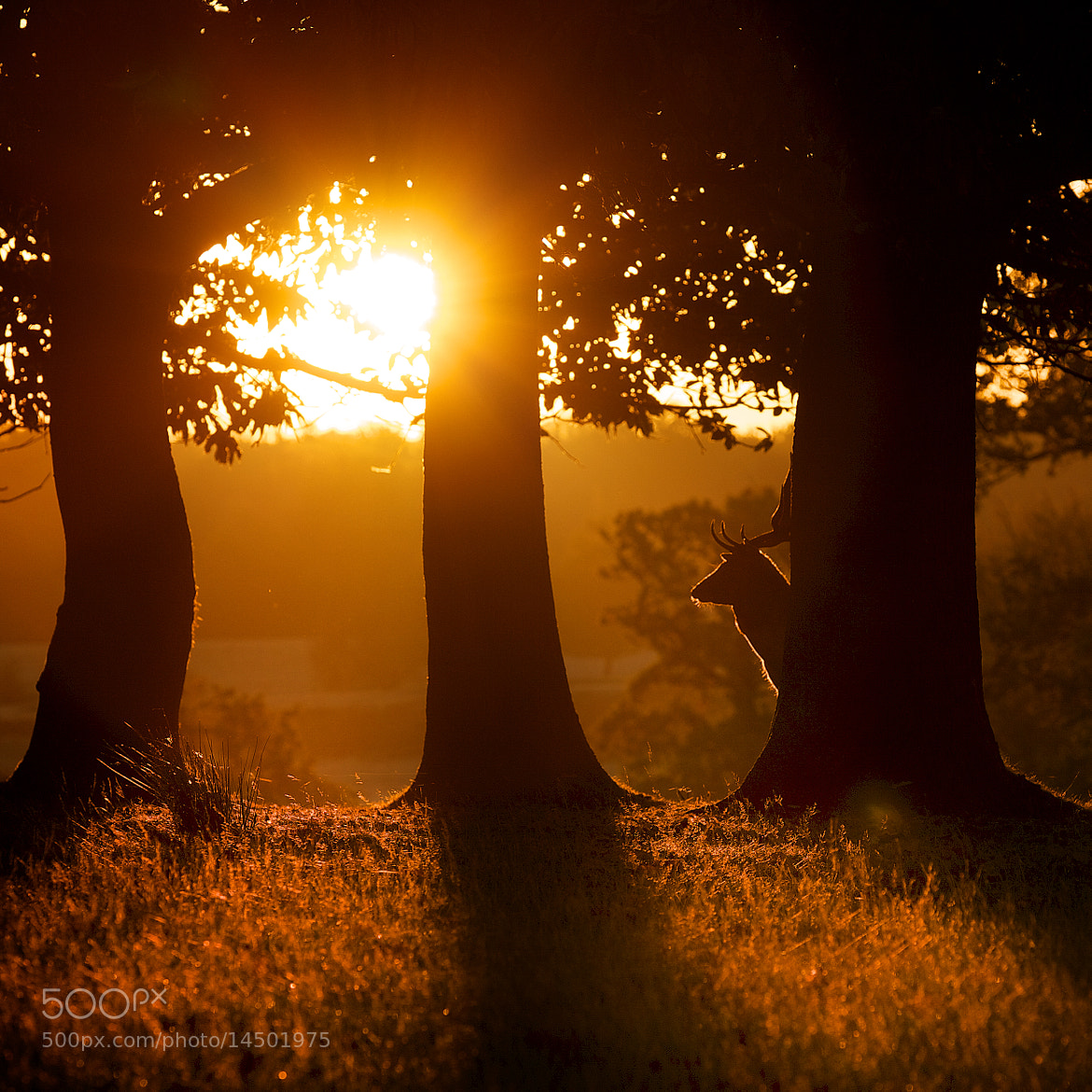 Photograph behind the tree by Mark Bridger on 500px