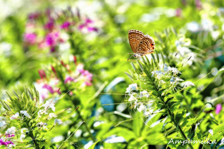 Photograph Sunlight by Suradej Chuephanich on 500px