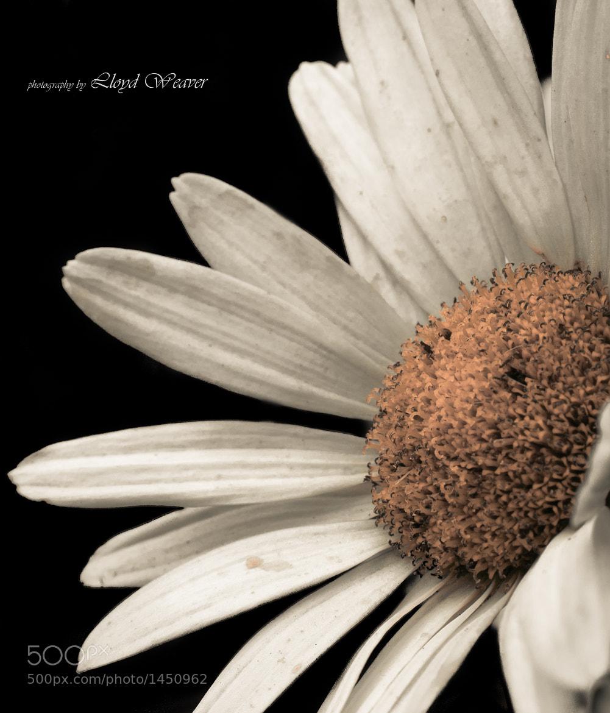 Photograph Flower by Lloyd Weaver on 500px