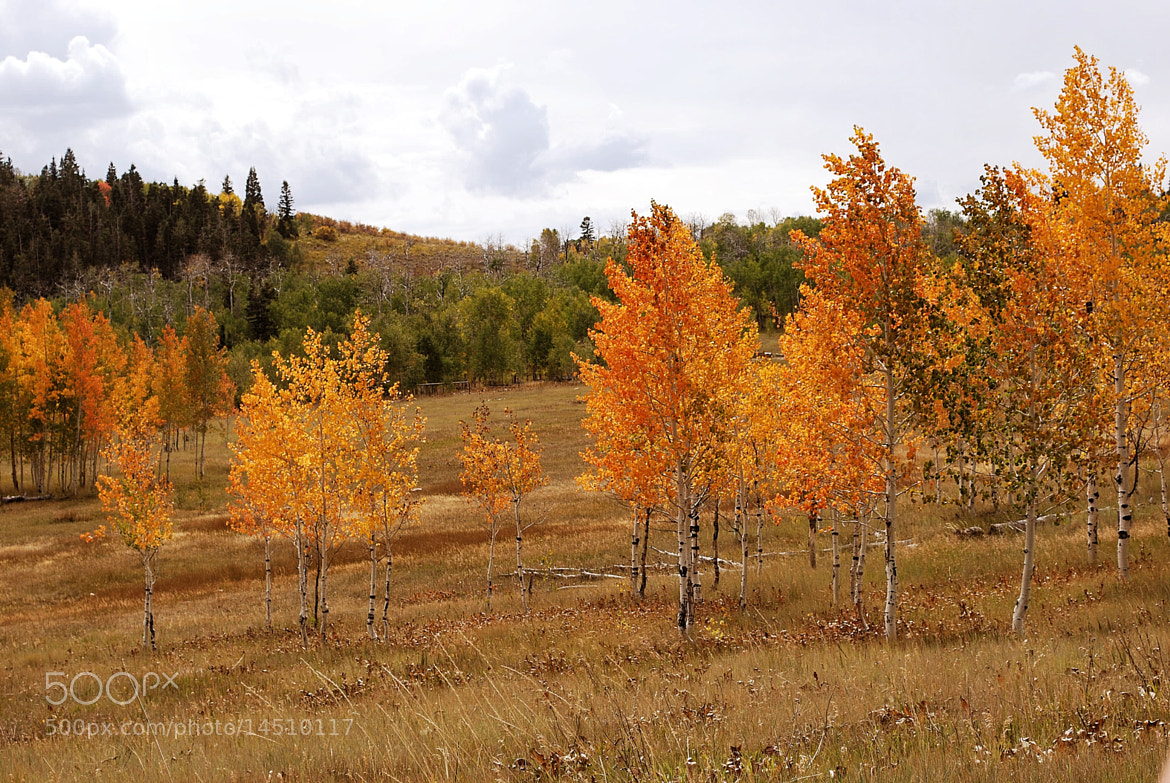 Photograph Aspen by Red Yeoman on 500px