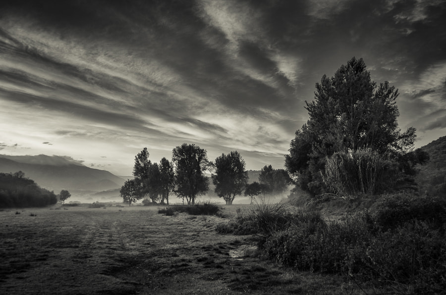 Photograph Morning fog by Morgan Tiphagne on 500px