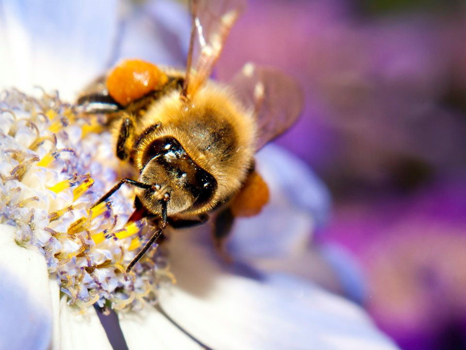 Photograph Bee by سحر شوقي on 500px