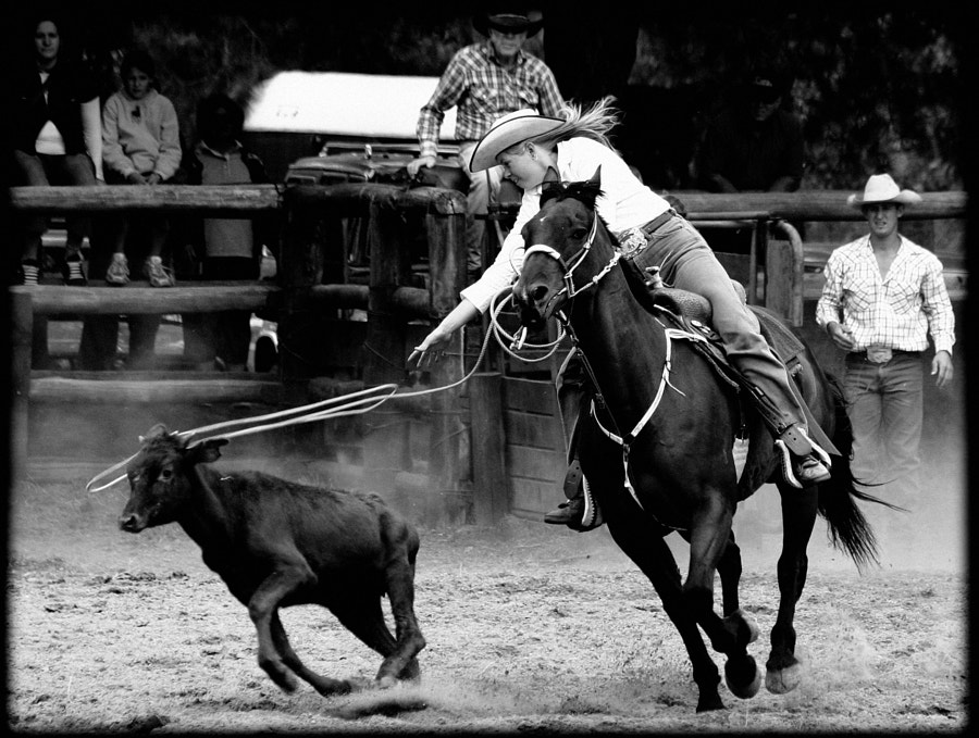 boddington rodeo by Paul Amyes on 500px.com