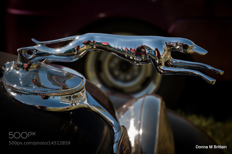 Photograph Sleek Hound by Donna Brittain on 500px