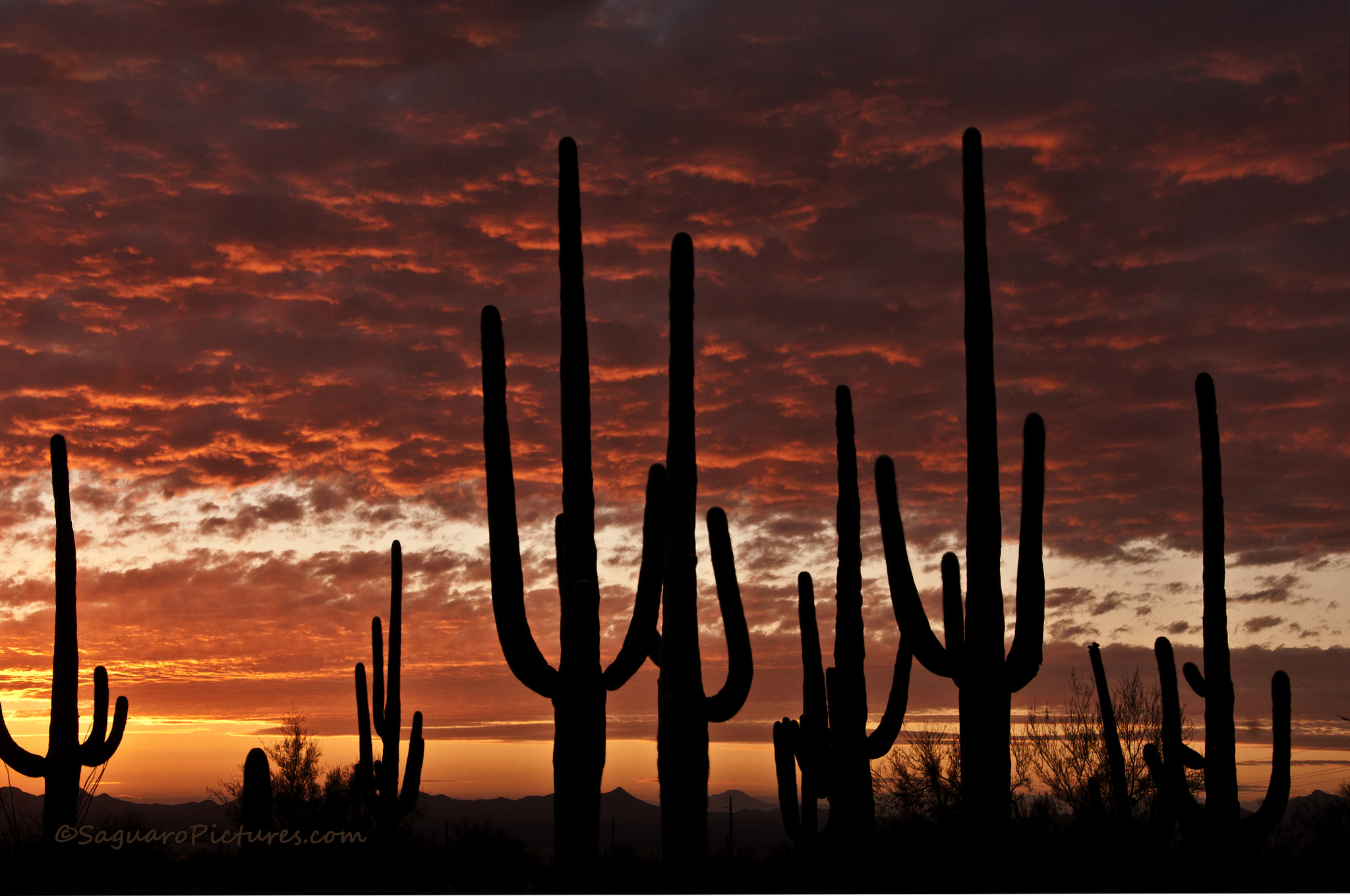 Photograph Sentinels of The Desert by Greg McCown on 500px