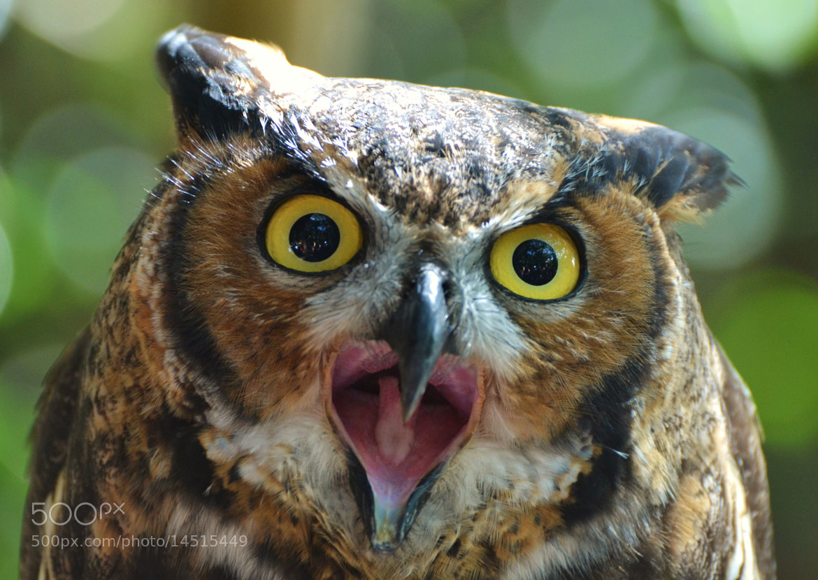 "Photograph ""Hoot"" by Michael Fitzsimmons on 500px"