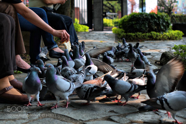 Photograph birds eat some bread... by Stephanus  Kelvin on 500px