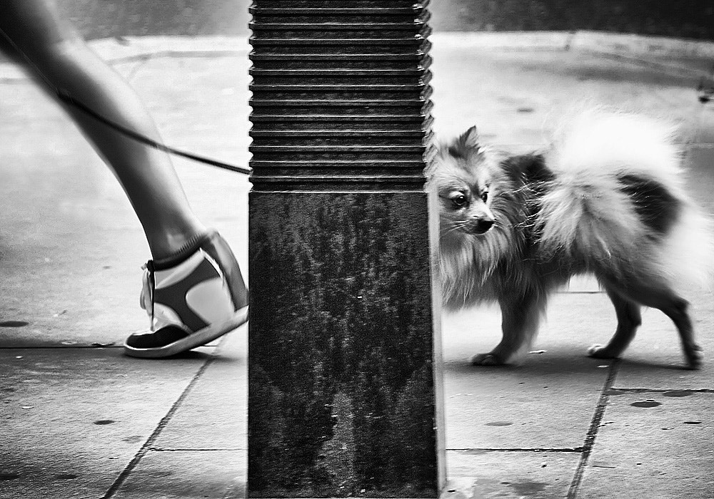Photograph walking in style by Vilija White on 500px